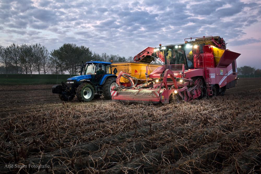 Rode aardappelrooier oogst de Zeeuwse aardappels en slaat deze tijdelijk op in zijn bunker.De lampen verlichten de omgeving tijdens zonsopkomst. De blauwe tractor haalt de aardappels op uit de bunker van de rooier.