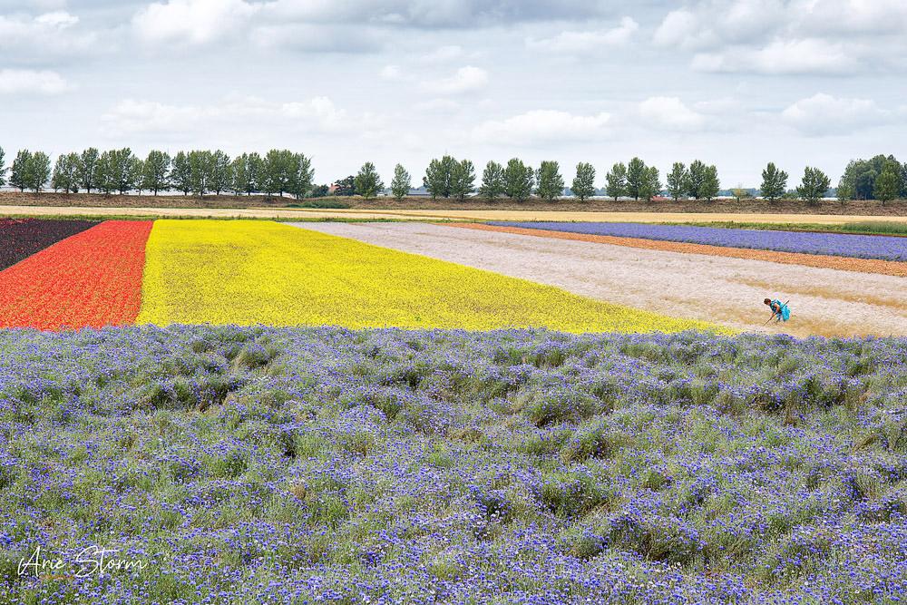 Agrarische sector, agricultuur, Arie Storm Fotografie,Tholen